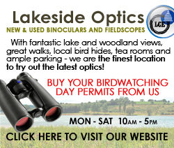 Thanks to Lakeside Optics for sponsoring CVL birding. Click here for their website.